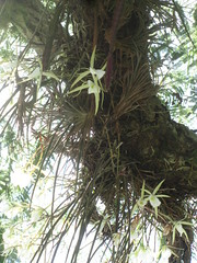 IMG_1388 (Casanovaumbria) Tags: iguassufalls plantsinbrazil