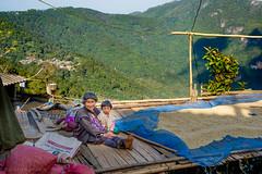 Chiengrai, Thailand (Goran Bangkok) Tags: chiengrai thailand akha hilltribe people coffee plantation culture mountain