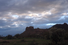 sOLACE sOUGHT iN a sONORAN sTORM 1 (wNG555) Tags: 2017 apachejunction apachetrail superstitionmountain superstitionwilderness sonorandesert desert cactus sky storm clouds winter olympusfzuikoautos38mmf18 arizona phoenix