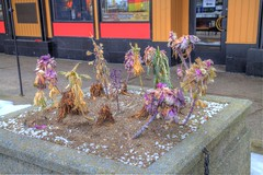 Winter Blooms, Halifax Waterfront, Nova Scotia (internat) Tags: 2017 canada novascotia ns halifax hdr waterfront downtown blooms