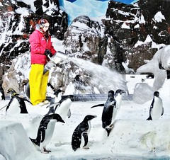 Keeping cool. (France-♥) Tags: 3185 femme travail neige snow woman work sandiego pingouin animal froid cold africanpenguin zoo californie penguin