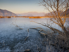 Frosty landscape (Riccardo Palazzani - Italy) Tags: torbiere brescia riserva naturale natural reserve nature frozen lombardei ロンバルディ 伦巴第大区 lombardie ломбардия lombardia لومباردي 롬바르디아 italia italie italien italy 이탈리아 италия itália italië イタリア italya 意大利 إيطاليا riccardo palazzani veridiano3 olympus omd em1 tramonto sunset puesta del sol sonnenuntergang закат 夕日 coucher du soleil 日落 غروب ghiaccio frosty icy ice tree