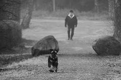 Running in the Park (evisdotter) Tags: running dog hund pet animal foggy morning park man bw sooc candid