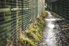 Yay! HFF. (jillyspoon) Tags: hff fencefriday happyfencefriday canon70d canon lensbaby edge50 puddles