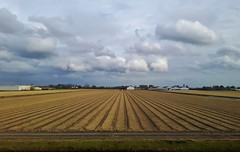 View from a train window between Amsterdam and Haarlem (Elisa1880) Tags: nederland netherlands amsterdam haarlem veld field train window treinraam trein wolken clouds