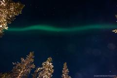 IMG_2901 (F@bione©) Tags: lapponia lapland marzo 2017 husky aurora boreale northenlight circolo polare artico rovagnemi finalndia finland