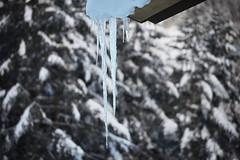 八ヶ岳(やつがたけ)-20170202_165123-LR (HYLA 2009) Tags: 八ヶ岳 alpineclimbing japan taiwan yhhsu yatsugatake mountain snow やつがたけ アイス アルプス クライミング 冬山 山 爬山 登山 許永暉攝影 雪地