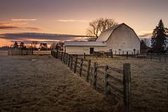 farm scene (Christian Collins) Tags: canoneos5dmarkiv morning barn farm scene amanecer sunrise michigan midmichigan february midland cows cattle grass winter clouds