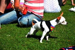 "Plymouth Pride 2015 - Plymouth Hoe -ah • <a style=""font-size:0.8em;"" href=""http://www.flickr.com/photos/66700933@N06/20004011484/"" target=""_blank"">View on Flickr</a>"