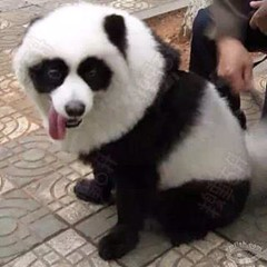 #Chengdu #China is home to pandas and people love them here. Have they gone too far this time?