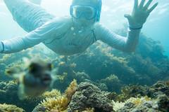 20150808-DSC_4576.jpg (d3_plus) Tags: sea sky fish beach japan scenery underwater diving snorkeling  shizuoka    apnea izu j4  waterproofcase    skindiving minamiizu       nikon1 hirizo  1030mm  nakagi 1  nikon1j4 1nikkorvr1030mmf3556pdzoom beachhirizo misakafishingport  1030mmpd nikonwpn3 wpn3