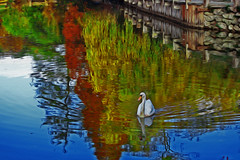 The white swan (s_gulfidan) Tags: autumn painterly reflections swan 300faves saariysqualitypictures