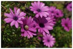 """""""Der Zweig, der nachgibt, bricht nicht"""". (Aus Japan) (eulenbilder) Tags: blumen augenblicke blüten geniessen kostbarkeiten eulenbilder2015 buntesaufwieseundflur"""