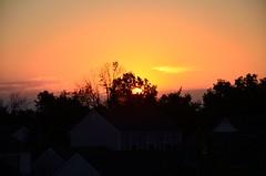 DSC_2309 (bfaling) Tags: trees columbus ohio red summer orange sun yard sunrise back glow neighborhood oh 2015