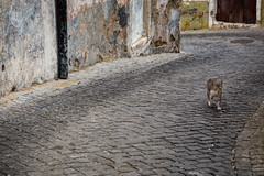 Cats Chasing humans (The eclectic Oneironaut) Tags: cats portugal canon eos chase pt subversive humans elvas 6d behaviour 2015 portalegre
