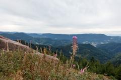 Sentier Lotharpfad  Baiersbronn (aurelien.ebel) Tags: de allemagne schwarzwald badenwrttemberg baiersbronn fortnoire oppenau badewurtemberg
