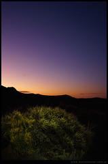 Cactus estepa y crepúsculo
