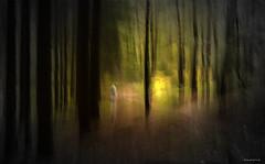 Fischbeker Heide - . . . to the light - point (Pana53) Tags: forest licht nikon outdoor myart grün wald figur dunkel punkt mensch wesen lightpoint ziehen schwarzeberge lichtschatten neugraben naturfoto lichtpunkt fischbekerheide nikond810 fischbek harburgerberge pana53 naturundlandschaftsfotografie photographedbypana53