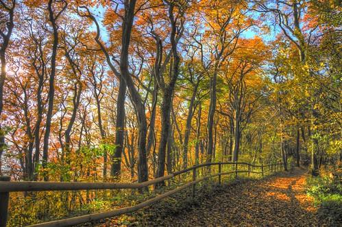 Autumn Trail (Explore)