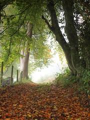 Foggy morning walk (tony marfell) Tags: autumn landscape lane lydbrook