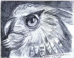 bho a lapicero (ivanutrera) Tags: bird animal pen sketch drawing ave owl pajaro draw dibujo lapicero buho boligrafo dibujoalapicero dibujoenboligrafo