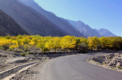 Autumn paved Road (Ray of Peace: Sunsets are Love) Tags: world life road trip travel autumn trees pakistan light sky mountain mountains travelling love nature landscape outside photography amazing asia moments peace tour natural unique awesome memories peaceful sunny tourist traveller explore enjoy imagination karakoram layers pakistani rays lovely magical feelings gilgit landscapephotography kpk karakorammountainrange rayofpeace kirannasir