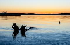 Clear December Sunset (cwhitted) Tags: sunset canon eos chathamcounty jordanlake canoneos400d canoneosdigitalrebelxti canonef28135mmisusm ebenezerchurchrecreationarea beverettjordanlake