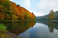 L'automne et ses couleurs phmres (Excalibur67) Tags: autumn nature forest automne landscape nikon sigma paysage reflexion reflets d7100 vosgesdunord forts ex1020f456dchsm