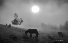 Contraluz entre niebla (Jabi Artaraz) Tags: jabiartaraz jartaraz euskoflickr zb horse contraluz sun sol niebla urkiolamendi siluetas frío