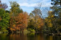 Autumnal (kzoop) Tags: nyc newyork newyorkcity manhattan centralpark fall autumn