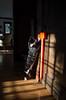 Winter Light on Cat (jkrumm) Tags: cat sidelight cattoy shadows