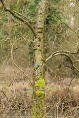 20170104-_IMG0947-Edit (fleetingphotons) Tags: pentaxk1 smcpentaxa200mmf28ed wasingestate fishing warrenbeat kennet trees