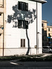 Alberi_08 (Giulio Gigante) Tags: alberi trees town city urban landscape documentary documentario colors colori pescara abruzzo italy adriatico adriatic coast giuliogigante giuliogigantecom road strada albero tree pino pine poems poesia poesie allaperto