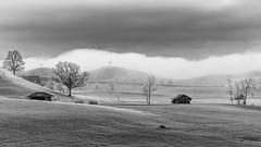 fog (schneider-lein) Tags: wow landscape nautre fog frosty foggy nebel field tree carlzeiss fe5518za sonyilce7rm2 alpha7rm2 a7rii black white wolken clouds baum blackwhite monochrome monotone winter frost kalt cold sonyflickraward