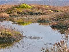 Peat Bog (Deepgreen2009) Tags: rannochmoor wilderness remote scotland peat bog highlands moss vegetation wetlands