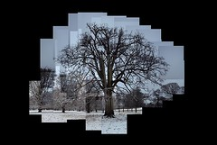Wollaton Park Snow Tree (ldjldj) Tags: wollaton park nottingham nottinghamshire tree trees photomontage hockney panograph joiner montage