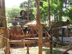 IMG_1345 (kamemex) Tags: メリダ動物園 センテナリオ サル