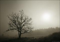 Boira -Niebla- (antoniocamero21) Tags: boira niebla paisaje contraluz color foto sony árbol sol manlleu catalunya
