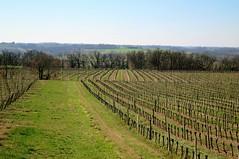 Sur les terres de l'Armagnac (Doonia31) Tags: armagnac gers vignes vin alcool raisin lignes cultures agriculture champs campagne piquets végétal nature france sudouest