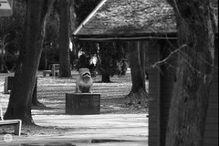 Białystok (Qdłaty) Tags: spacerak 400mm nikon podlaskie białystok bw luty blackandwhite film polska 2017 bialystok f65 tokina400 podlasie tokina analog poland
