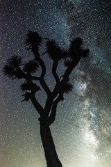 Joshua Tree Starry Night Astrophotography!  Nikon D810 Fine Art Night Milkyway Photography! (45SURF Hero's Odyssey Mythology Landscapes & Godde) Tags: longexposure sky tree art nature night stars photography landscapes nikon long exposure skies joshua fineart fine silhouettes wideangle astrophotography astronomy nightsky starry fineartphotography starrynight milkyway naturephotography wideanglelens naturephotos astrograph d810 longexposurephotography fineartphotos longexposurenight milkywaygalaxy 45surf fineartphotographer starphotography nightskyphotography elliotmcgucken astrolandscape elliotmcguckenfineartphotography elliotmcguckenphotography drelliotmcgucken elliotmcguckenfineart herosodysseymythology masterfineartphotography astrolandscapephogtography goldenheosodyssey starrynightastrophotographynikond810fineartnightphotographymilkywayrisinglongexposureastrophotographyiusedtoteachastronomy sothiswasfunnightphotography