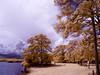 CRW_0058 (LValdes) Tags: landscape florida canong3 irconverted lvaldes