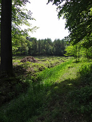Gulke putten, Ruiselede (henk.wallays) Tags: macro nature closeup landscape landscapes europa belgium wildlife natuur location date 2012 aaaa vlaanderen oostvlaanderen ruiselede gulkeputten henkwallays