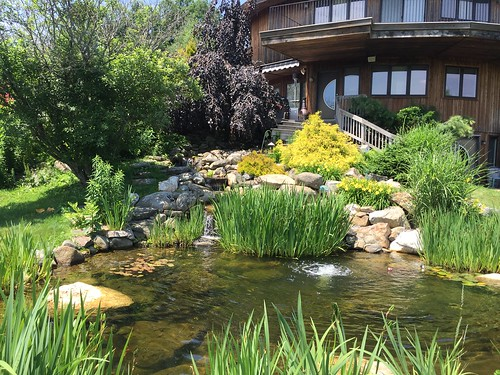 Custom 6000 gal Pond - Private Residence - CT - 5