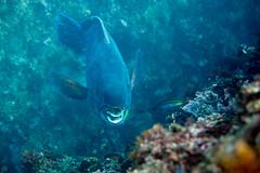 20150922-DSC_4684.jpg (d3_plus) Tags: sea sky fish beach japan scenery underwater diving snorkeling  shizuoka    apnea izu j4  waterproofcase    skindiving minamiizu       nikon1 hirizo  1030mm  nakagi 1  nikon1j4 1nikkorvr1030mmf3556pdzoom beachhirizo misakafishingport  1030mmpd nikonwpn3 wpn3