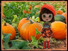 Pumpkin patch perfection...