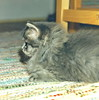 00383 (d_fust) Tags: cat kitten gato katze 猫 macska gatto fust kedi 貓 anak katt gatito kissa kätzchen gattino kucing 小貓 고양이 katje кот γάτα γατάκι แมว yavrusu 仔猫 का बिल्ली बच्चा