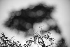 Siluetas (Joaquim F. P.) Tags: light sunset sky luz nature field lens atardecer flora nikon mod experimental dof bokeh extreme creative natura paisaje outoffocus cielo reflejo verano flare campo swirl shallow 105 fullframe nikkor dslr lente tarragona mediterrneo salou pdc opticaleffect brillo optics nops objetivo remolino micronikkor105mm 105mm optica objective jfp d610 visualeffect micronikkor optico primelens nikontelephoto bokehsample petzvaleffect