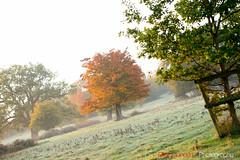 Hatfield_Forest-19 (Eldorino) Tags: park uk morning autumn trees nature forest sunrise landscape countryside nikon britain centre jour hatfield bishops stortford essex hertfordshire stanstead hatfieldforest