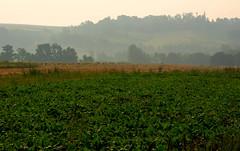 Poranna mgła 19 (Hejma (+/- 5400 faves and 1,7 milion views)) Tags: trees green nature fog landscape outside poland polska august natura zielony mgła drzewa krajobraz sierpień acclivity cultivations wzniesienie uprawy chłopskiepola płaskowyżproszowicki peasantfields plateauproszowicki